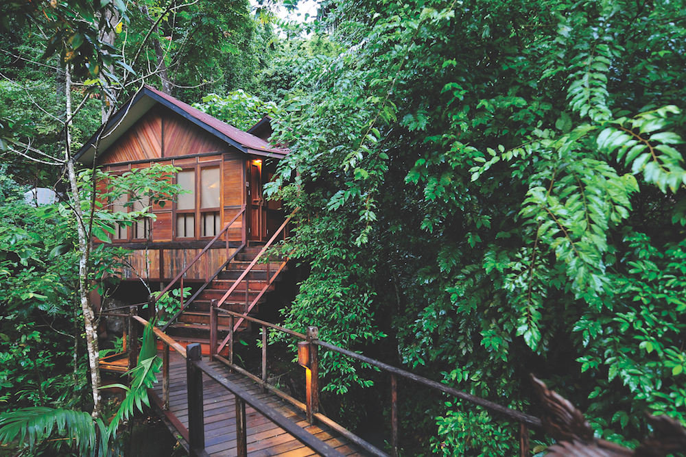 Rainforest Retreats